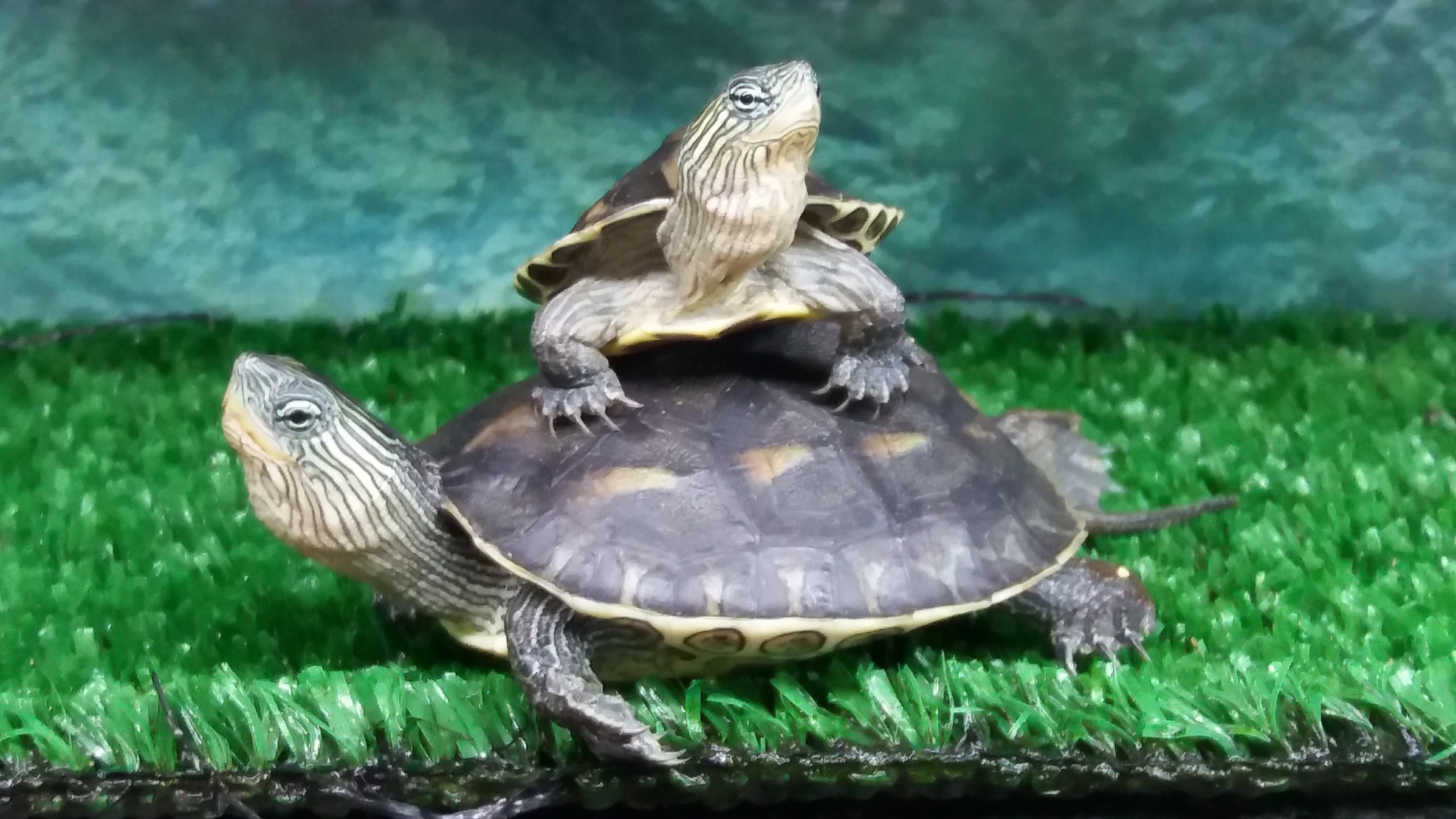 paulus marcinelle poisson reptile aquarium terrarium. Black Bedroom Furniture Sets. Home Design Ideas
